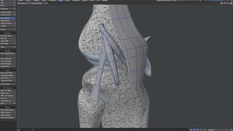 3D Knee Joint Model