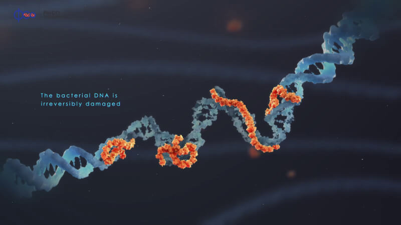 The bacterial DNA is irreversibly damaged